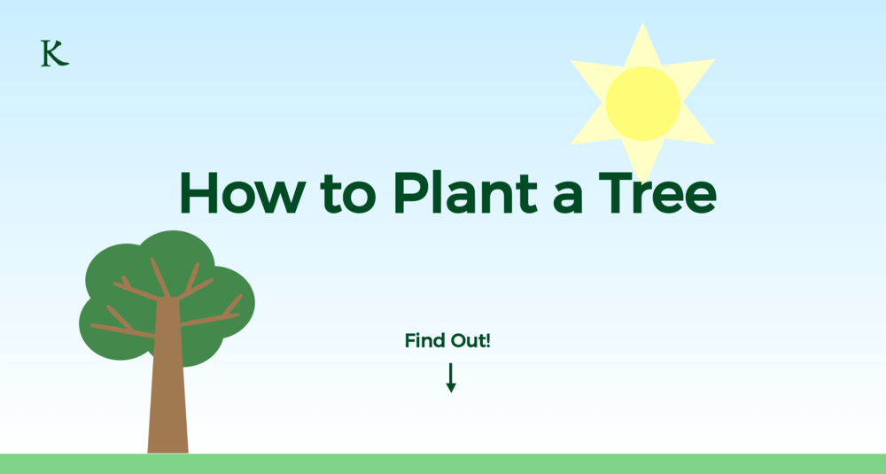 How to Plant a Tree - Web Development, Graphic Design, WritingDesigning and developing a nature-themed interactive infographic demonstrating how to plant a tree