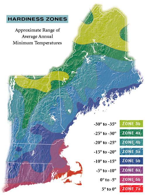 new england hardiness zone map.jpg