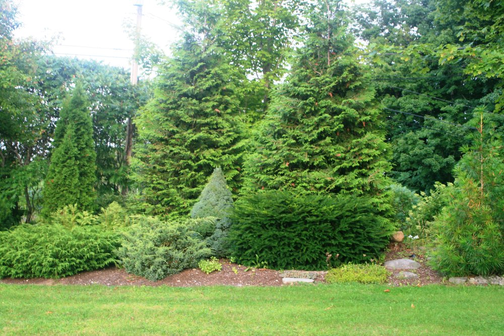 AS&L's Nursery manager Bill's evergreen garden in August.