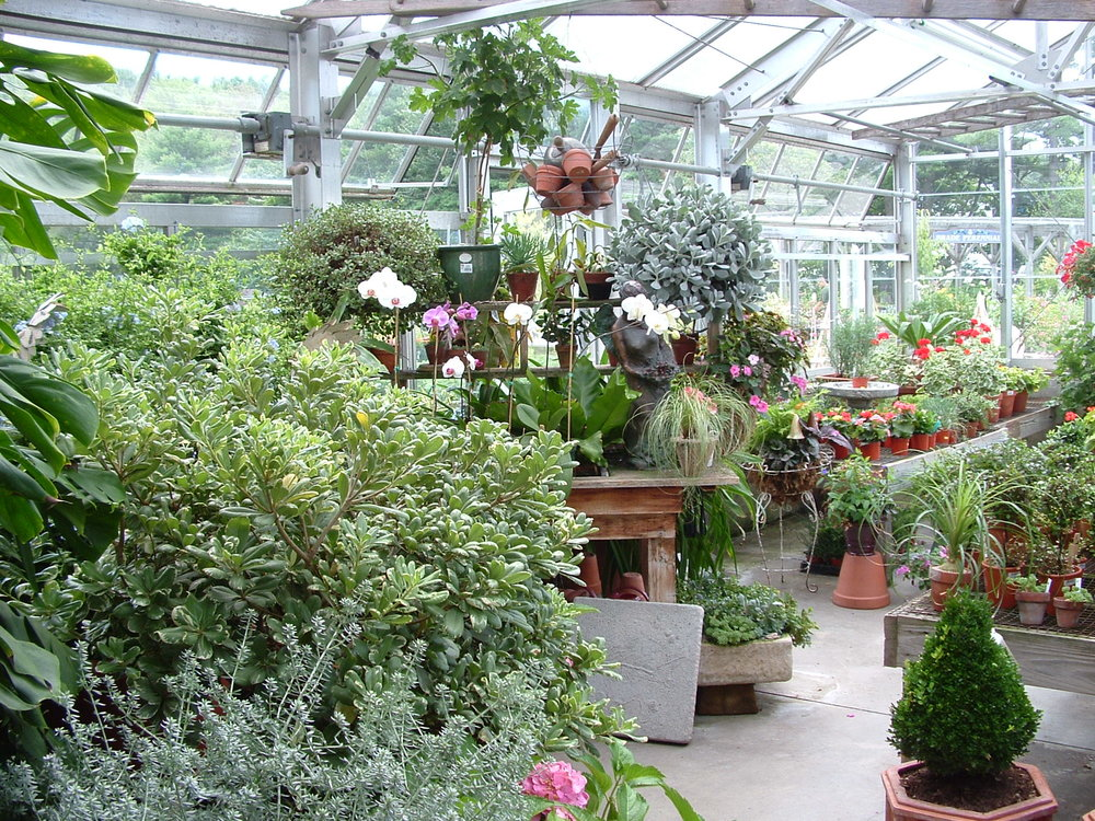 shirleys greenhouse.JPG