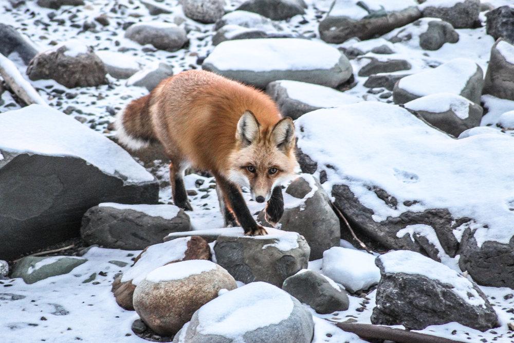 Red Fox Stones