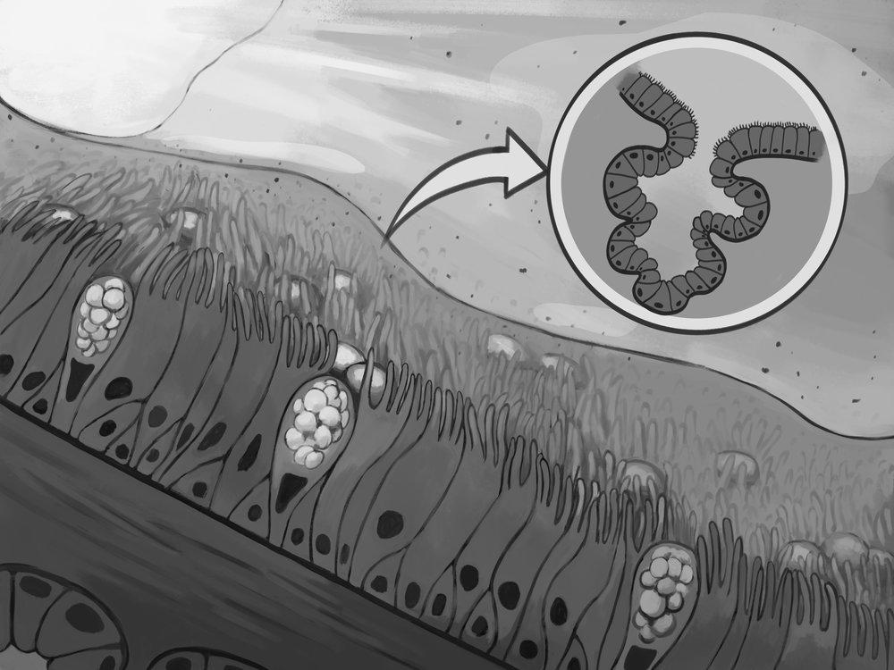 Tissue Landscape - Bronchus 3.jpg