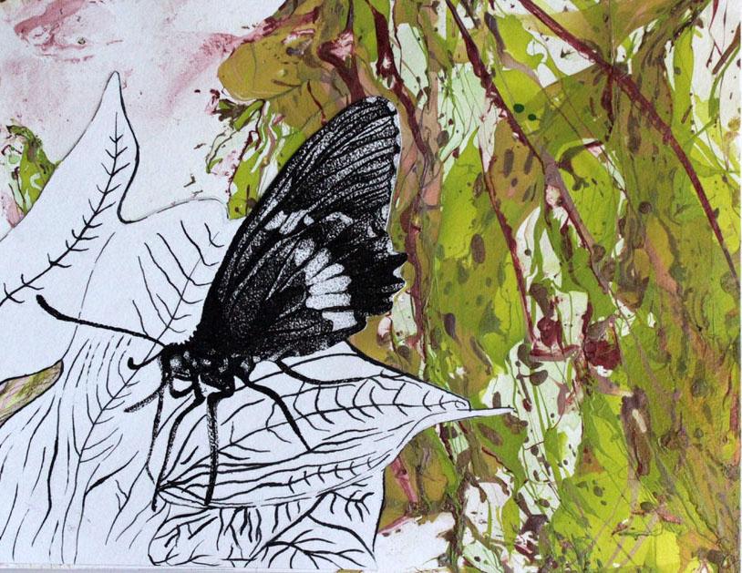 butterfly edit 1.jpg