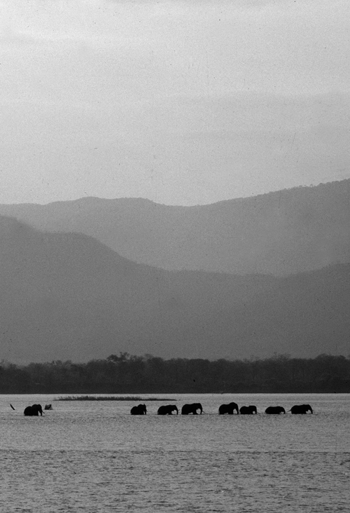 Our History - The Zambezi Society was formed in 1982 to lobby against a dam site in the Mupata Gorge which would have flooded the Zambezi Valley in the Mana Pools area.  The proposal was abandoned and Mana Pools-Sapi-Chewore was later declared a World Heritage Site.Since then, the Zambezi Society has worked closely with local and global organisations and communities to deliver many successful conservation projects and awareness campaigns. Our work is informed by research and a deep-love and local knowledge of the Zambezi Valley.