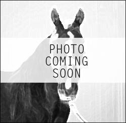 horses_comingsoon.png