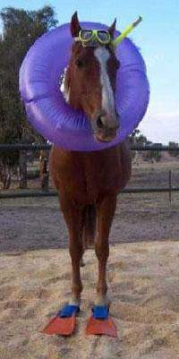 Horse_fins_mask_snorkel.jpg