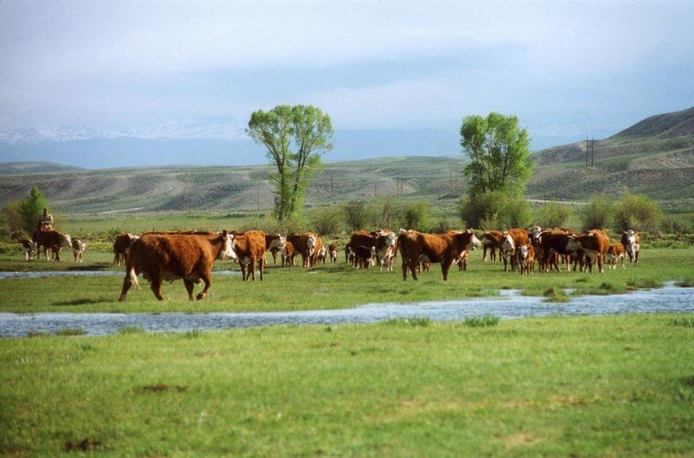 purebreds horse pasture616.jpg