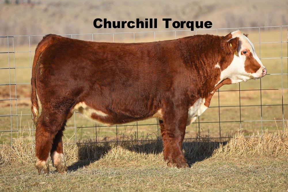 Churchill Torque