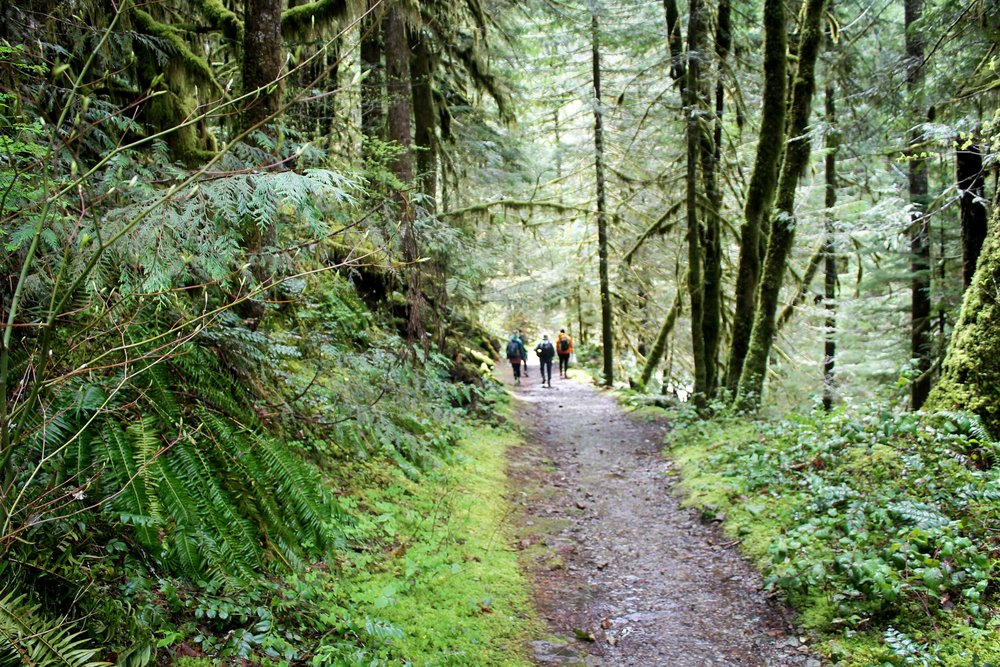 Participants hiking through pristine old growth forests. Photo courtesy of  Lily Uoka .