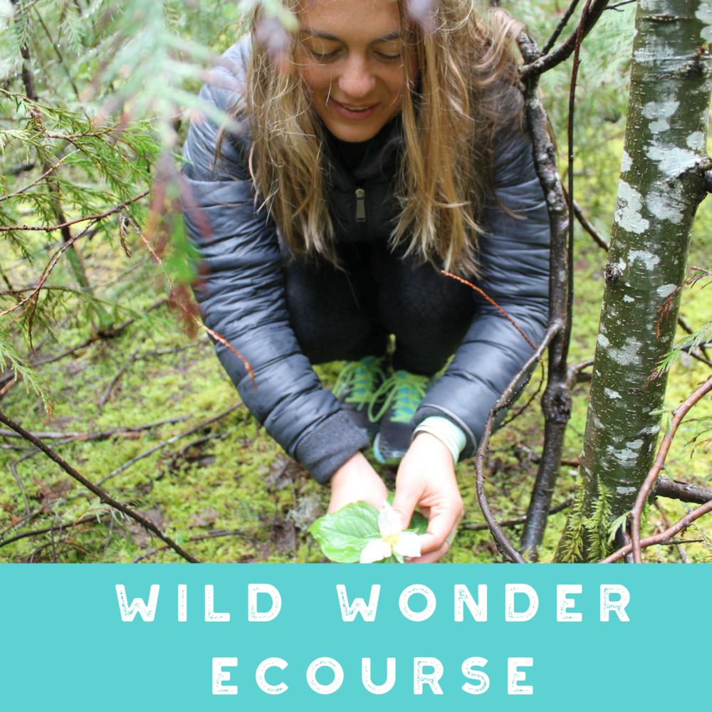 Annamieka Davidson Wild Wonder Self Study Instant Access ECourse
