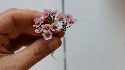 Annamieka_Davidson_Lifebook2019_Flowers.png