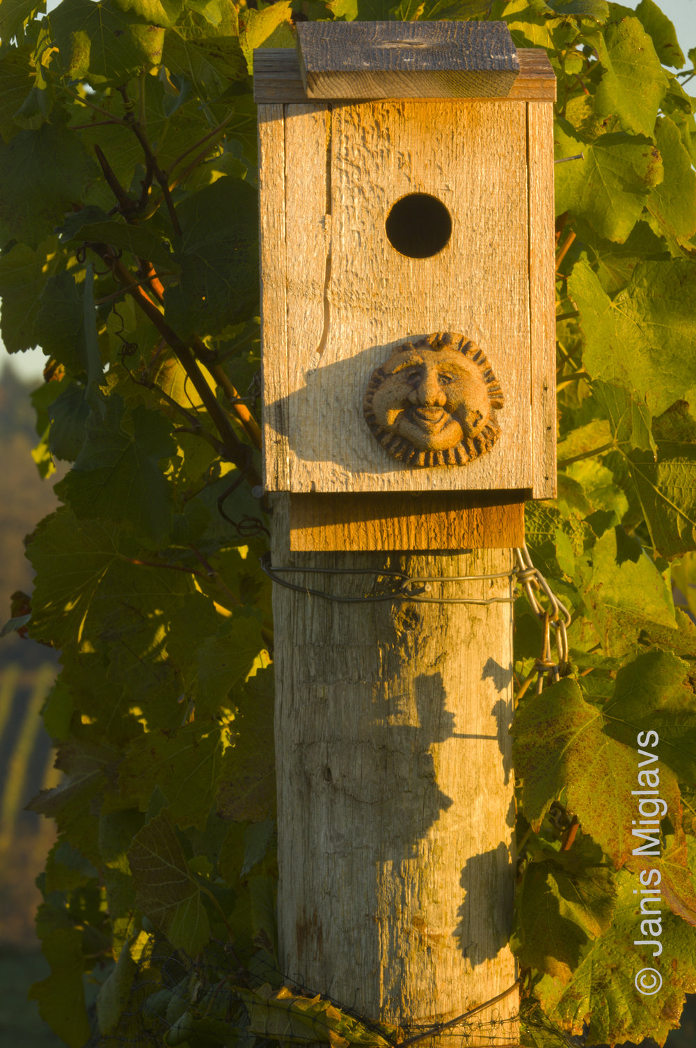 Happy Birdhouse