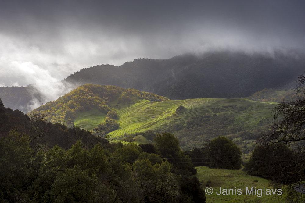 Spring Mountain Vineyard Storm