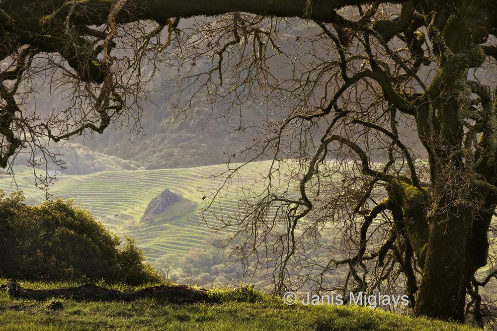 Oak Overlooks Spring Mountain Vineyard