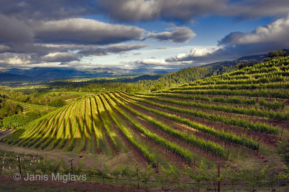 Vineyard Valley View