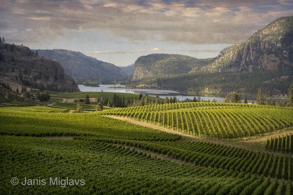 Canada Okanagan Vineyard View