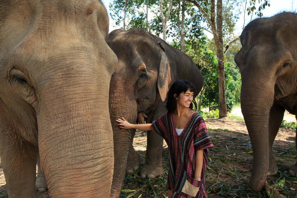 elephants-27.jpg