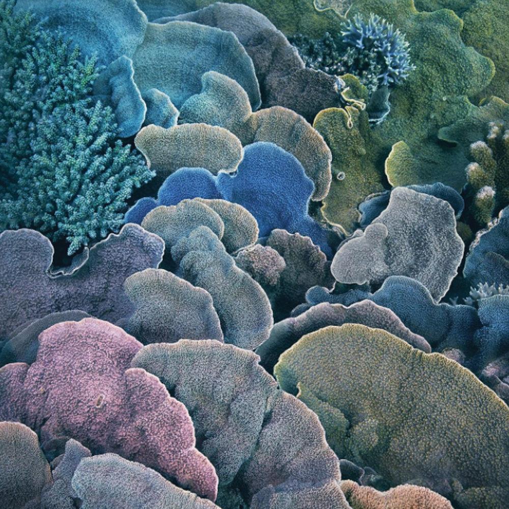 Tim corals.jpg