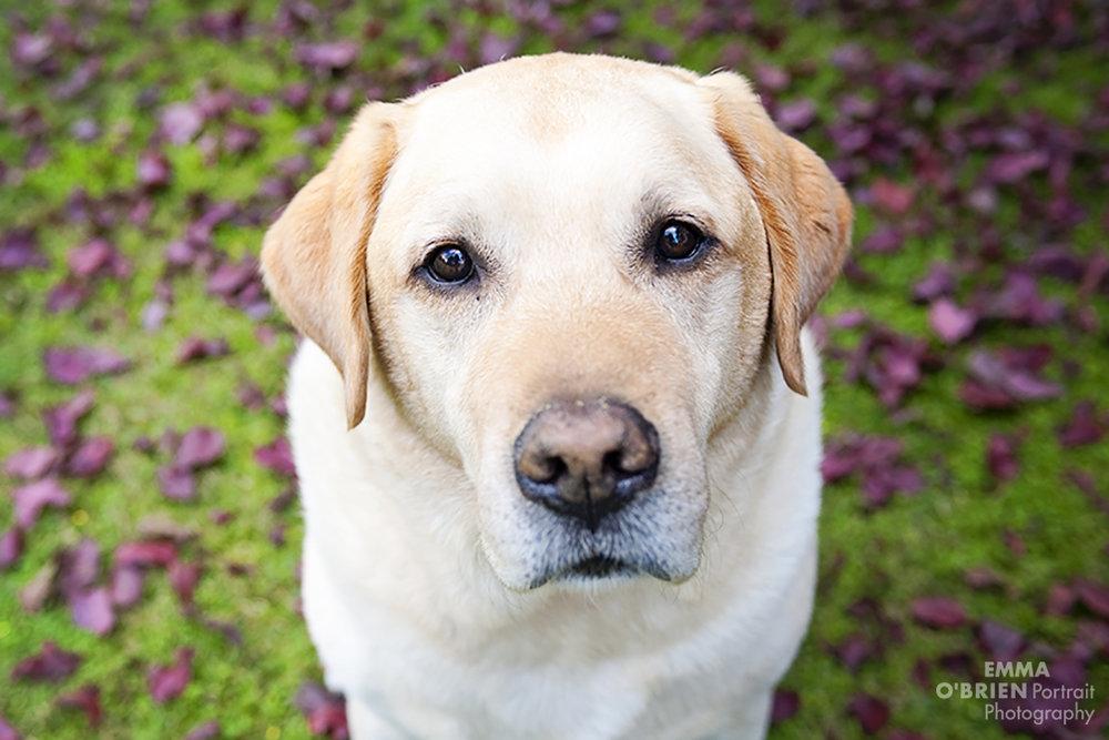 Dog portrait photography johannesburg pretoria