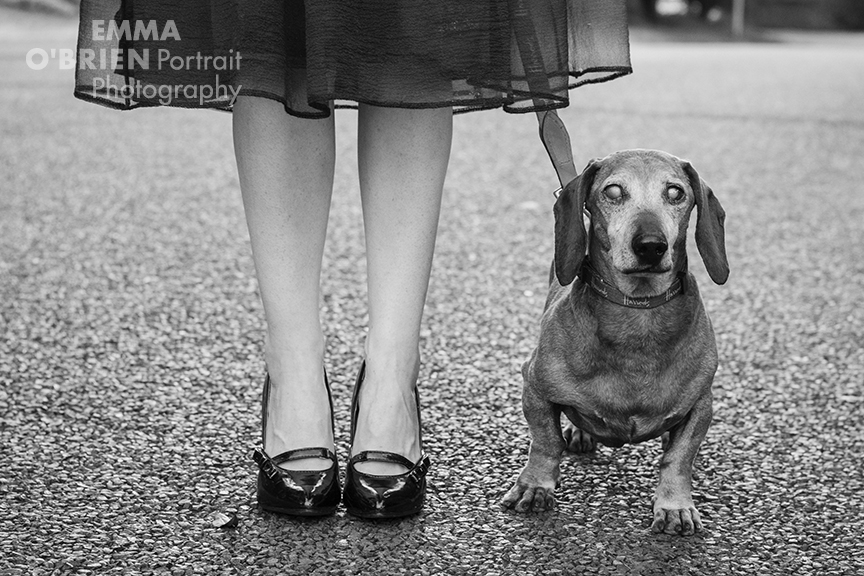 rescue dog photographer