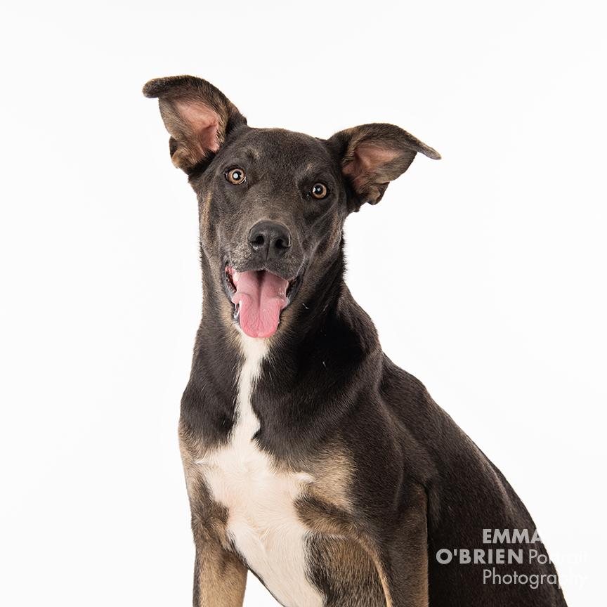 rescue dog studio photography