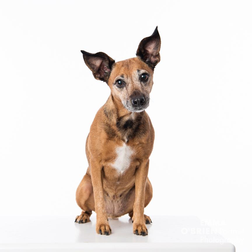 rescue dog portrait photography studio centurion