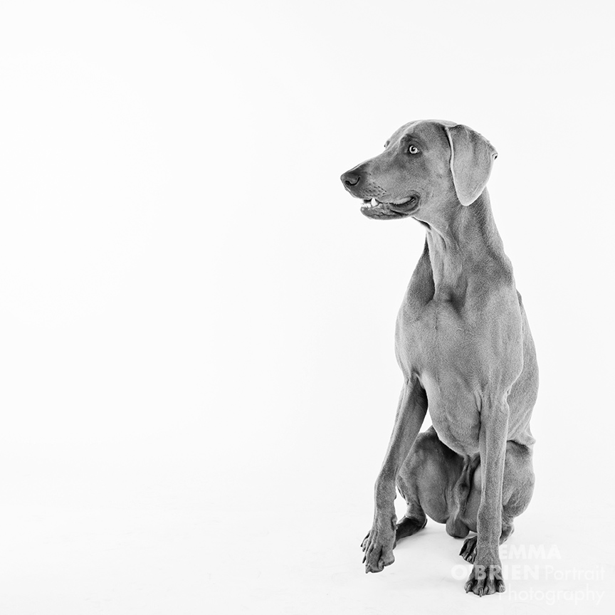 studio dog portrait photography johannesburg pretoria