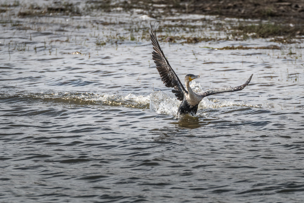 birds-large-nowatermark-2.jpg