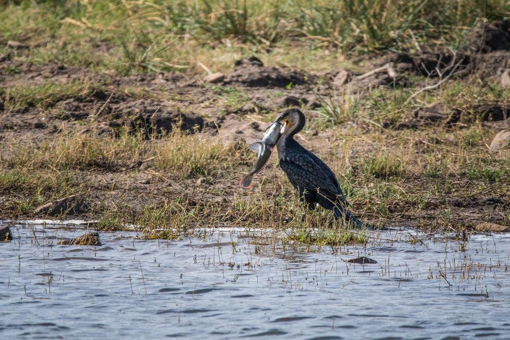 birds-large-nowatermark-6.jpg