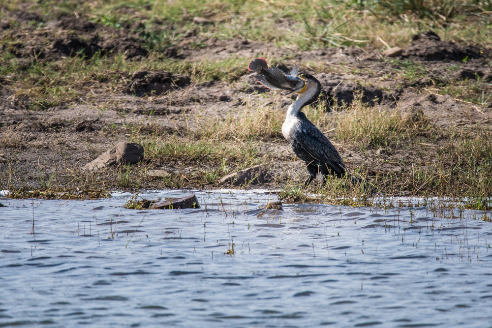 birds-large-nowatermark-9.jpg