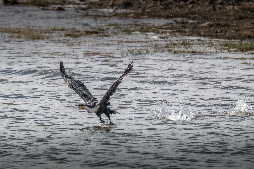 birds-large-nowatermark-13.jpg