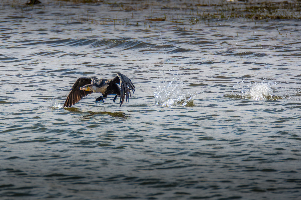 birds-large-nowatermark-14.jpg