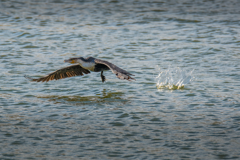 birds-large-nowatermark-16.jpg