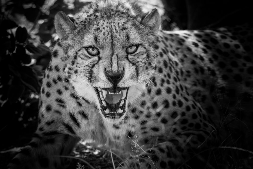 Wildlife-2-4.jpg