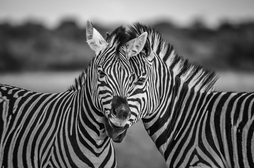 Wildlife-2-6.jpg