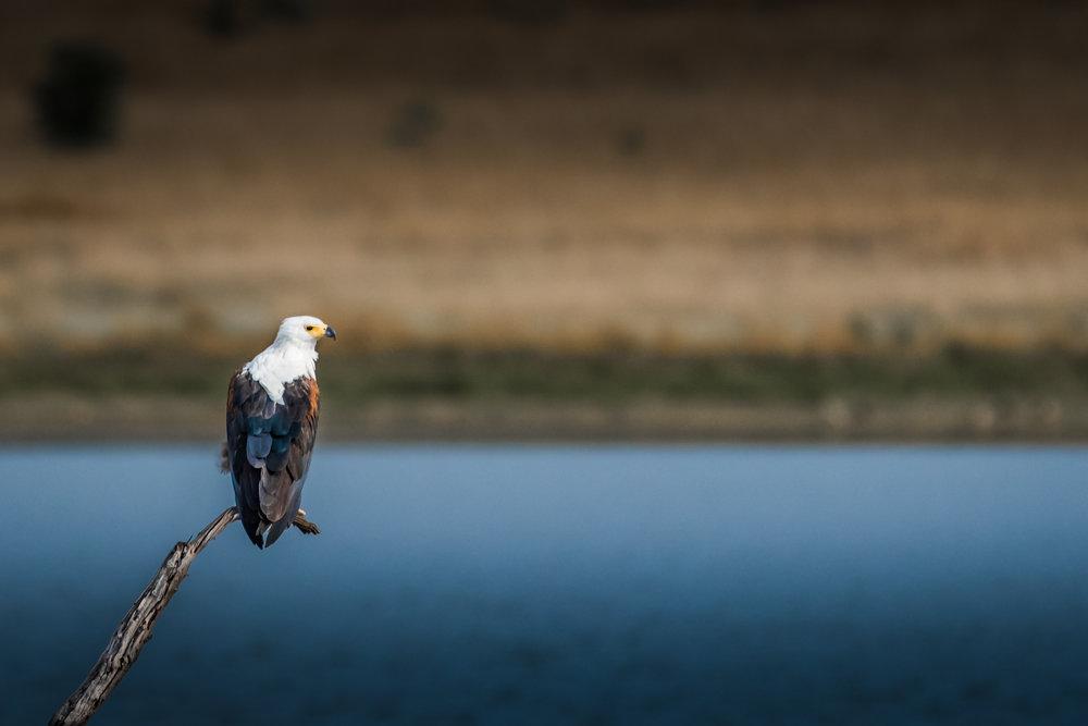 Wildlife-3.jpg