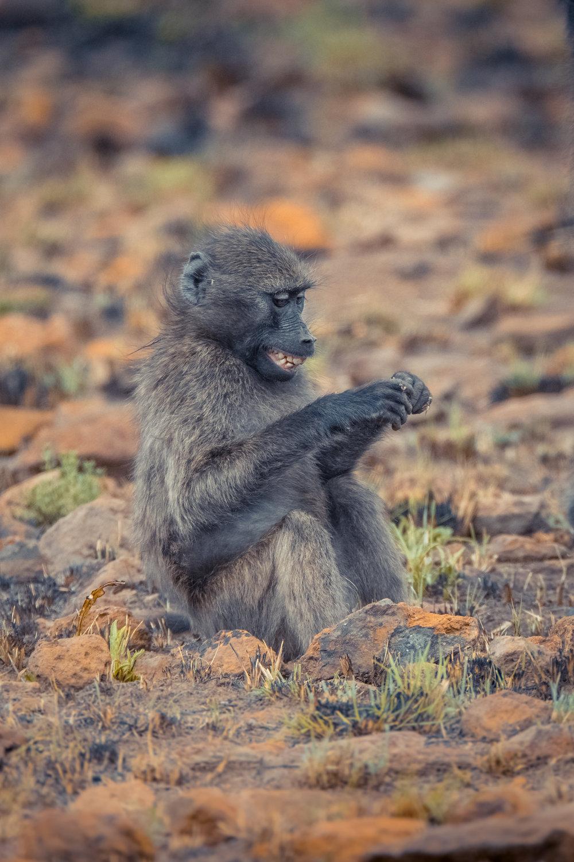 Wildlife-8.jpg