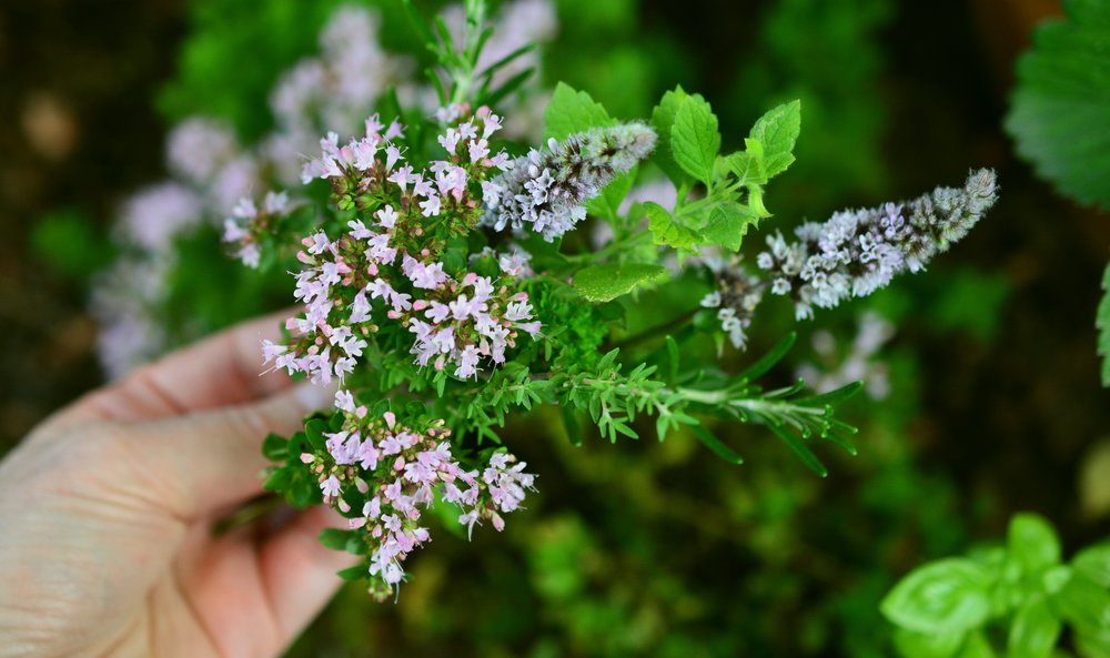 culinary-herbs-2614245.jpg