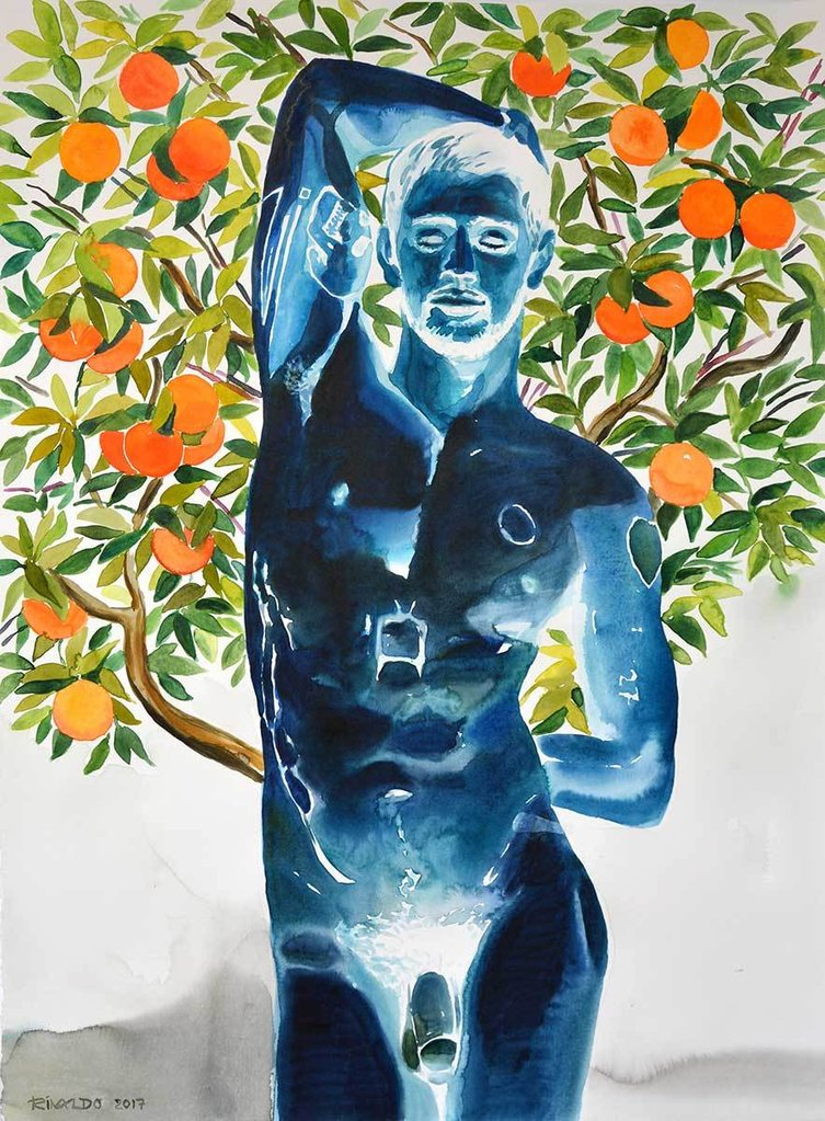 DAVID OF THE ORANGES