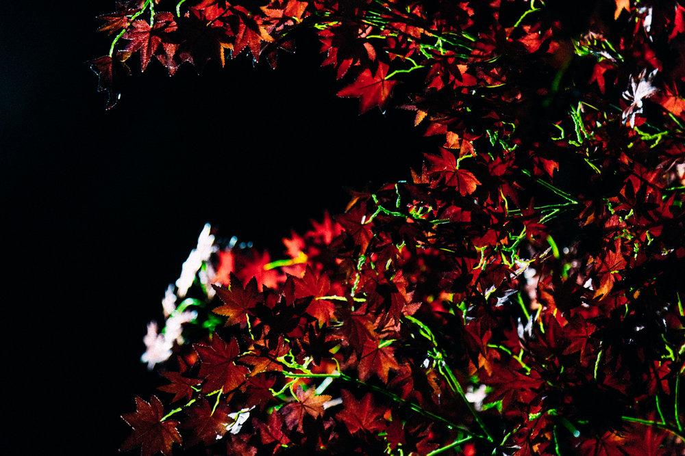 Orchard_03.jpg