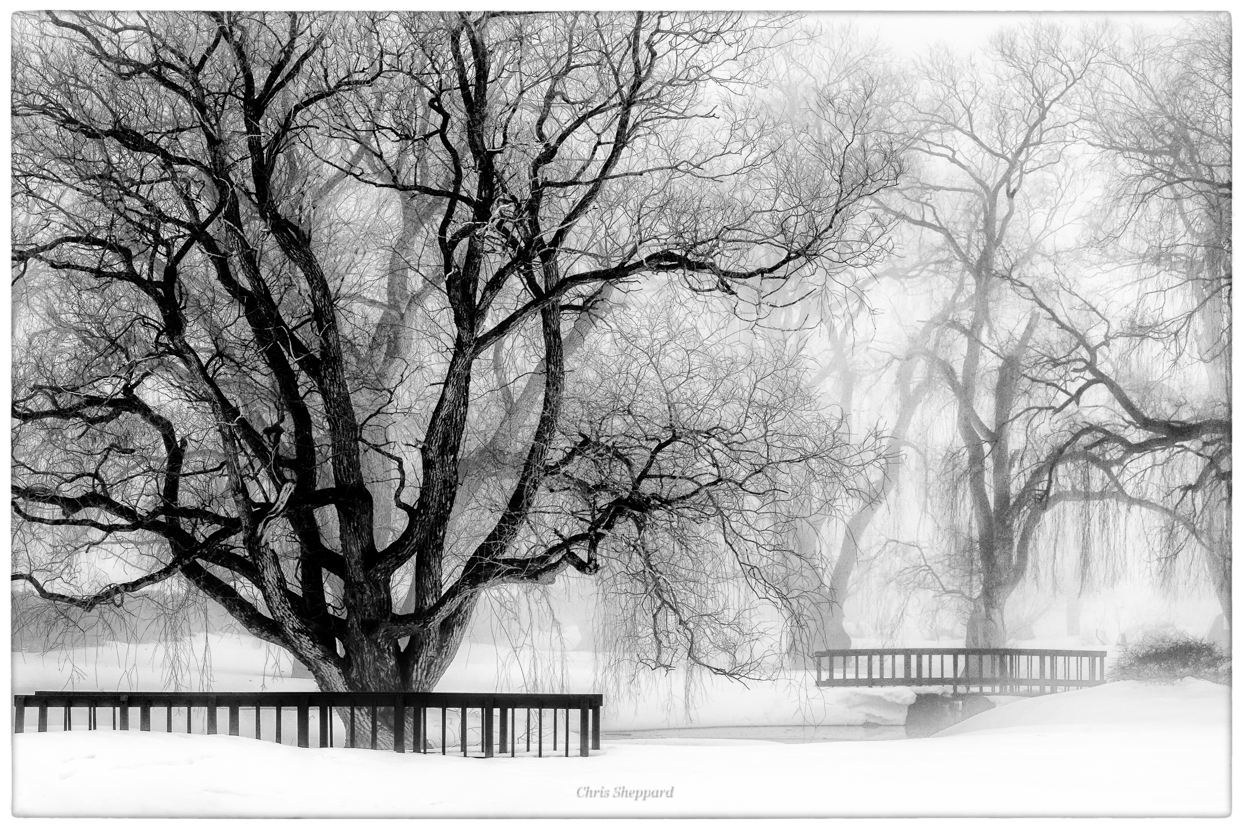 Winter In Black And White >> Adventures In Black And White Chris Sheppard