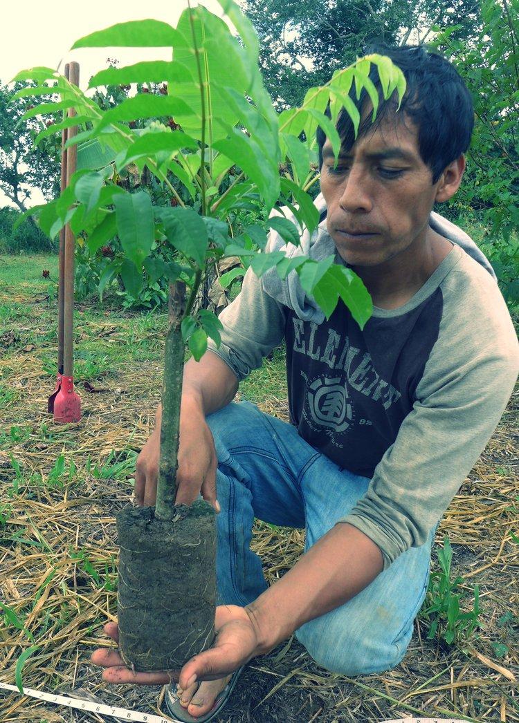 Hombre con planta.jpg