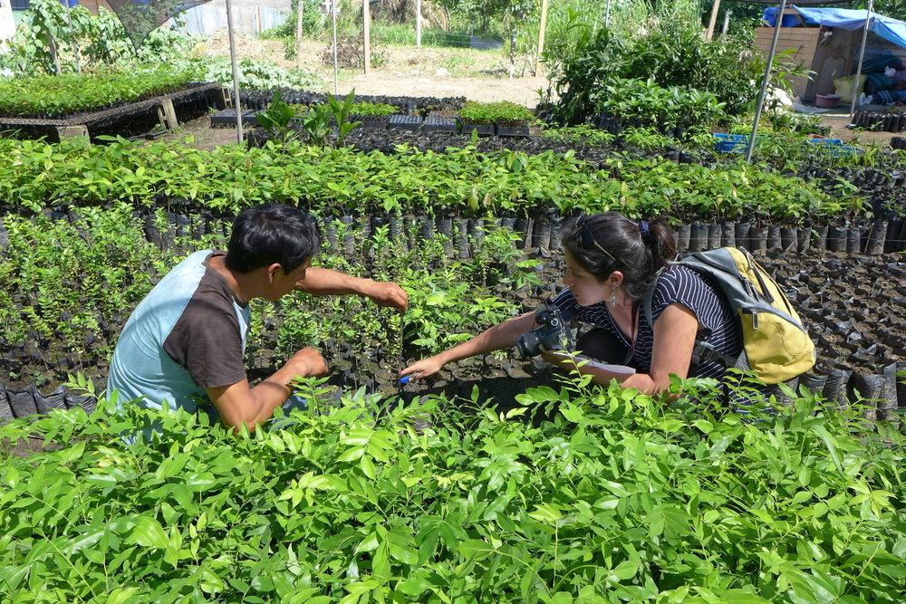Restauración de la biodiversidad mediante la plantación activa de árboles amazónicos nativos: más de 100 especies al año