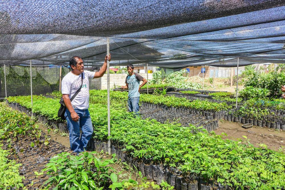 Camino Verde es parte de una red informal de esfuerzos de reforestación en Madre de Dios que incluye el Instituto de Investigaciones de la Amazonía Peruana IIAP, el Centro de Innovación Científica Amazónica CINCIA y viveros privados.