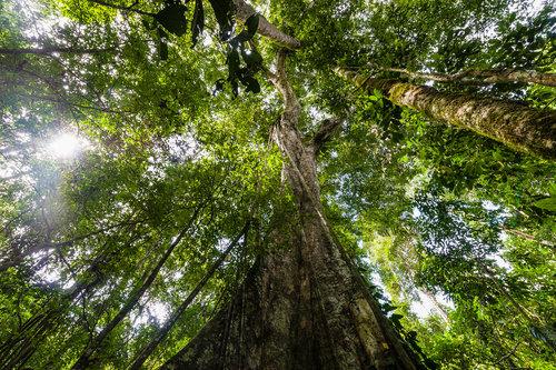 El valor de los árboles nativos es bien conocido por la economía extractivista, pero se pasa por alto y se entiende poco en un contexto de silvicultura (reforestación).