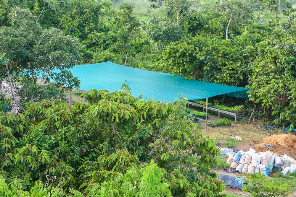 Un área del Vivero Forestal Camino Verde La Joya