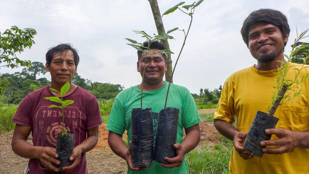 El personal del Vivero Camino Verde La Joya muestra algunas de las plántulas de 2016, cada una de las cuales contiene una carga de biochar en su maceta. Las plántulas de izquierda a derecha:  Aspidosperma  sp.,  Dipteryx micrantha ,  Croton lechleri,  y  Salix humboldtiana .