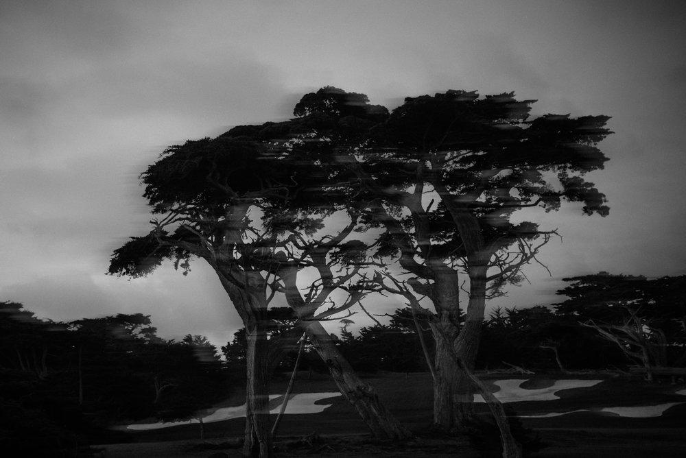 Cypress Point-9240.jpg