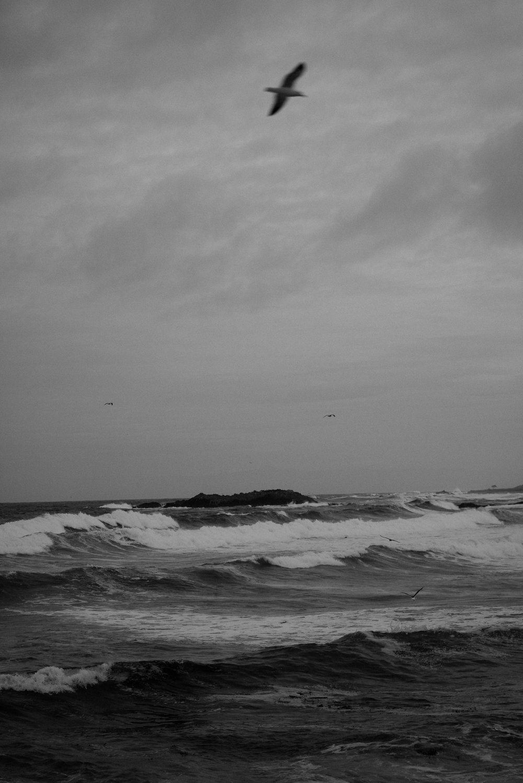 Cypress Point-9293.jpg