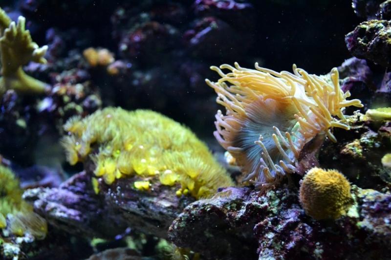 ecologie-5-innovations-ocean.jpg